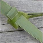weaving a flax fantail step 18