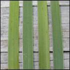 weaving a flax fantail step 1
